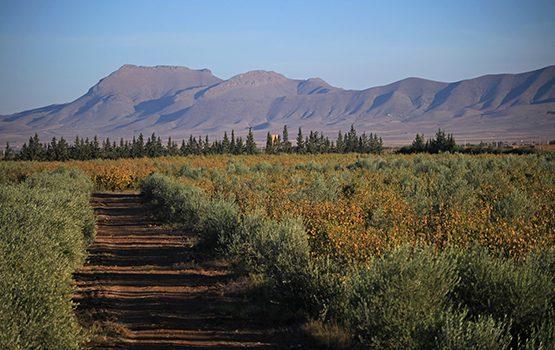 oliviers-zitoun-marrakech-002