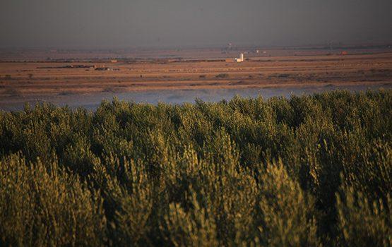 oliviers-zitoun-marrakech-003