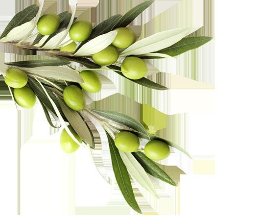 oliviers-zitoun-marrakech-gauche